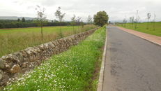 Wildflower meadows at SRUC, Elmwood Golf Course image #1