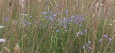 Wildflower Meadows image #1