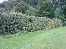 Hedges on Campus image #1