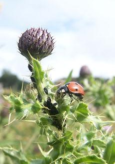 Why conserve biodiversity? image #1