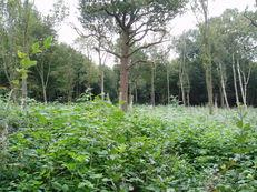 Woodlands image #2