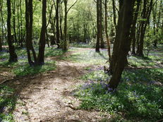 Managing Existing Trees and Woodlands image #2