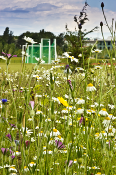 Edge Hill University - Wildflower Meadows image #1