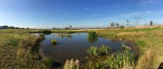 Edge Hill University - Pond image #1