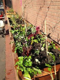 Manchester Metropolitan University - Lunchtime gardening sessions image #2