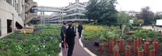 Sustainable Gardening at the University of Leeds image #2