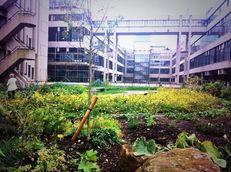 Sustainable Gardening at the University of Leeds image #1