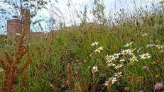 Swansea University Launches New Biodiversity Action Plan image #1