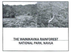 Photograph of part of the Wainikavika Forest to be considered for the project.