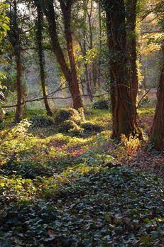 Woodlands image #1